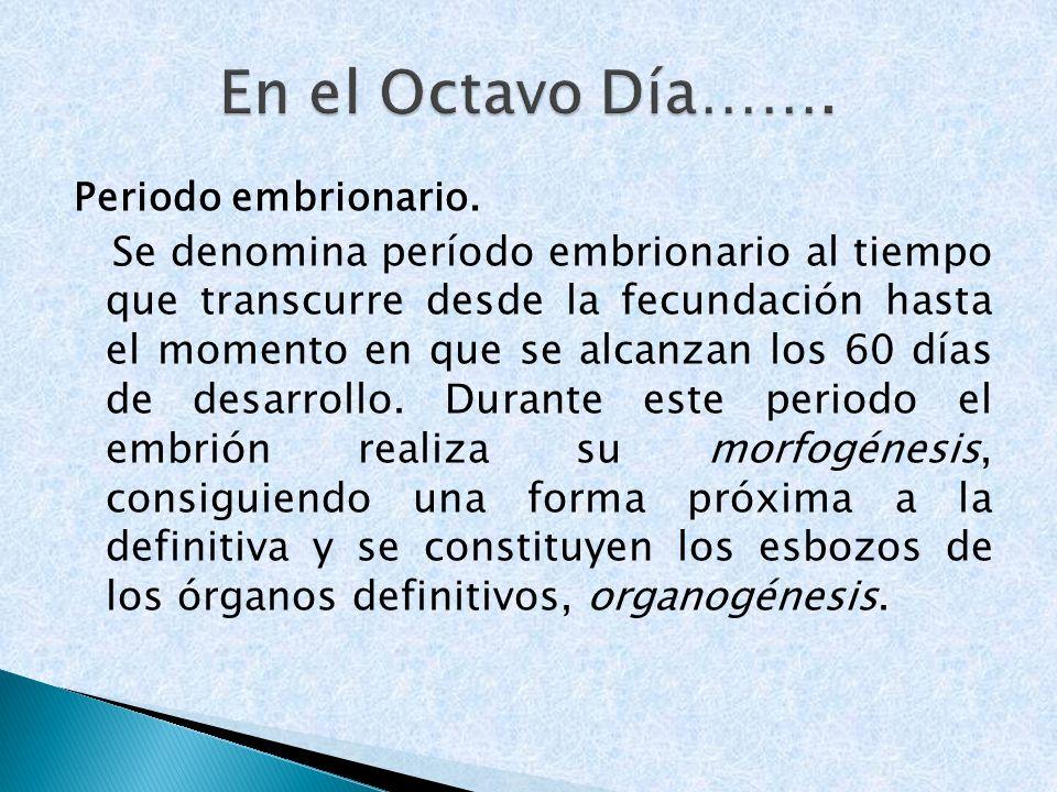 Periodo embrionario. Se denomina período embrionario al tiempo que transcurre desde la fecundación hasta el momento en que se alcanzan los 60 días de