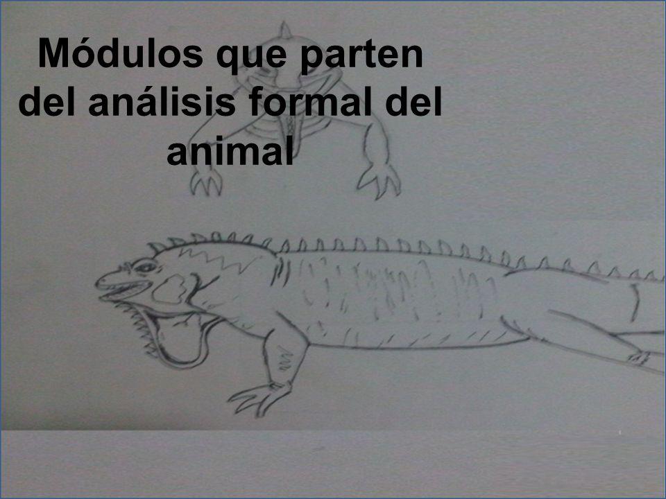 Módulos que parten del análisis formal del animal