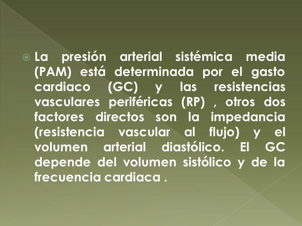 La presión arterial sistémica media (PAM) está determinada por el gasto cardiaco (GC) y las resistencias vasculares periféricas (RP), otros dos factor