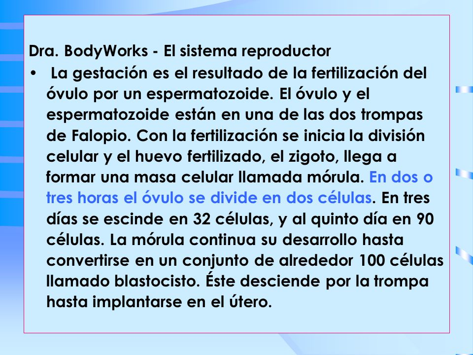 Dra. BodyWorks - El sistema reproductor La gestación es el resultado de la fertilización del óvulo por un espermatozoide. El óvulo y el espermatozoide