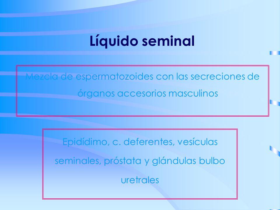 Líquido seminal Mezcla de espermatozoides con las secreciones de órganos accesorios masculinos Epidídimo, c. deferentes, vesículas seminales, próstata