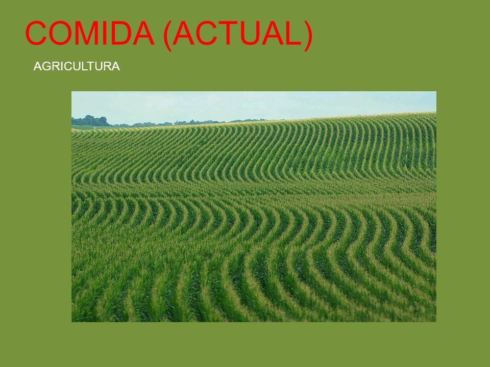 COMIDA (ACTUAL) AGRICULTURA