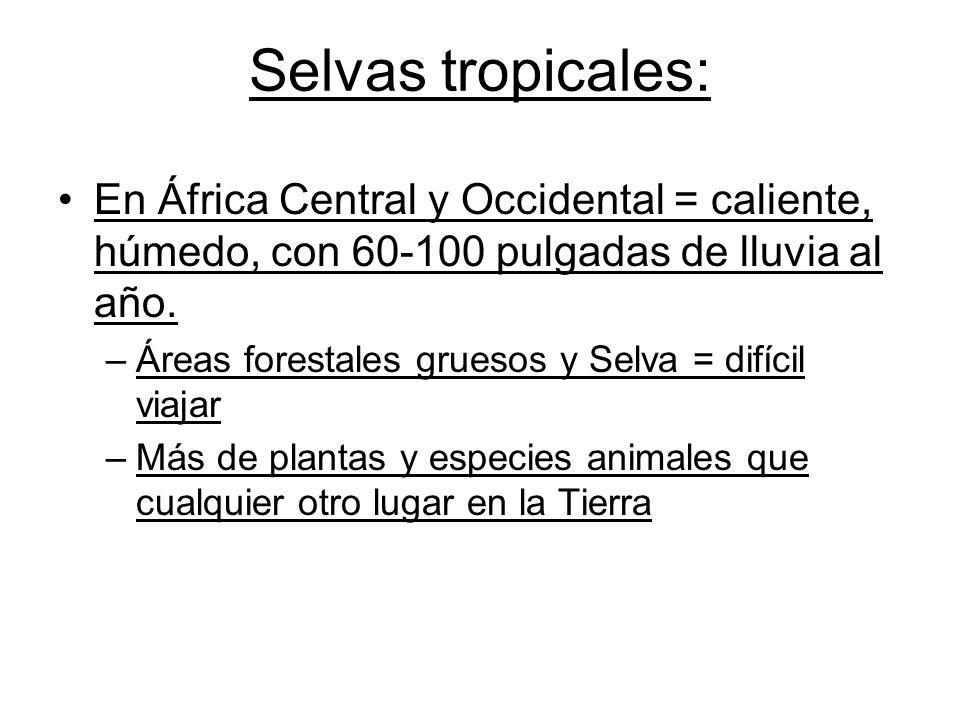 Selvas tropicales: En África Central y Occidental = caliente, húmedo, con 60-100 pulgadas de lluvia al año.