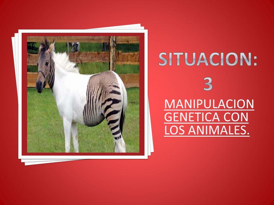 MANIPULACION GENETICA CON LOS ANIMALES.