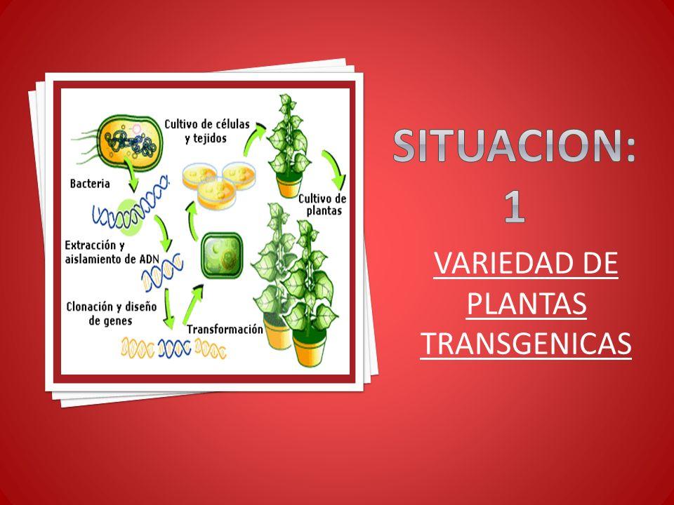 VARIEDAD DE PLANTAS TRANSGENICAS
