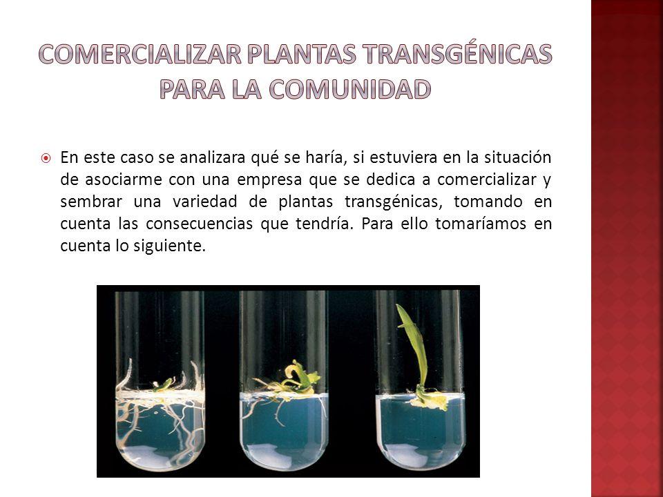 La planta transgénica contiene uno o más genes que han sido insertados en forma artificial en lugar de que la planta los adquiera mediante la polinización.