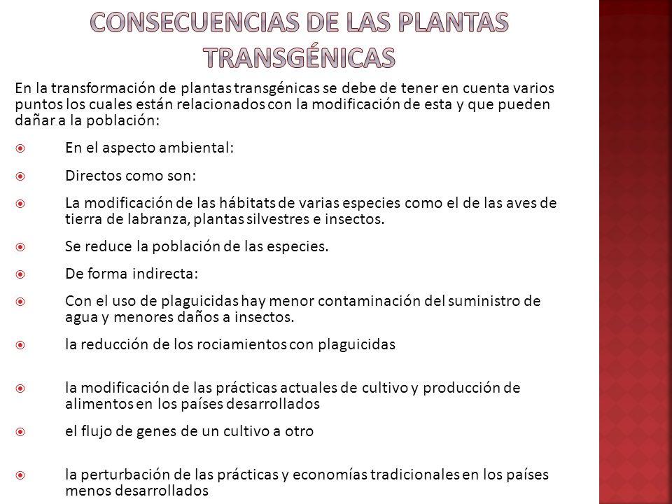 En la transformación de plantas transgénicas se debe de tener en cuenta varios puntos los cuales están relacionados con la modificación de esta y que
