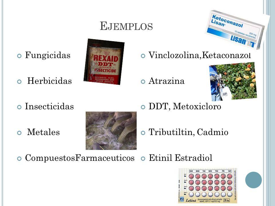 Fenoles Componentes de plásticos Hidrucarburos aromaticos Fitoestrógenos Surfactantes Retardadores de la llama Bisfenol A ftalatos PCBs Dioxina.