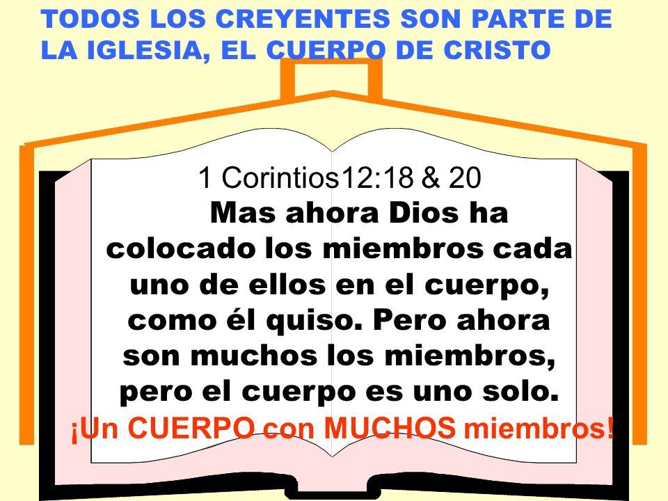 LA IGLESIA LOCAL TODOS LOS CREYENTES SON PARTE DE LA IGLESIA, EL CUERPO DE CRISTO 1 Corintios12:18 & 20 Mas ahora Dios ha colocado los miembros cada uno de ellos en el cuerpo, como él quiso.