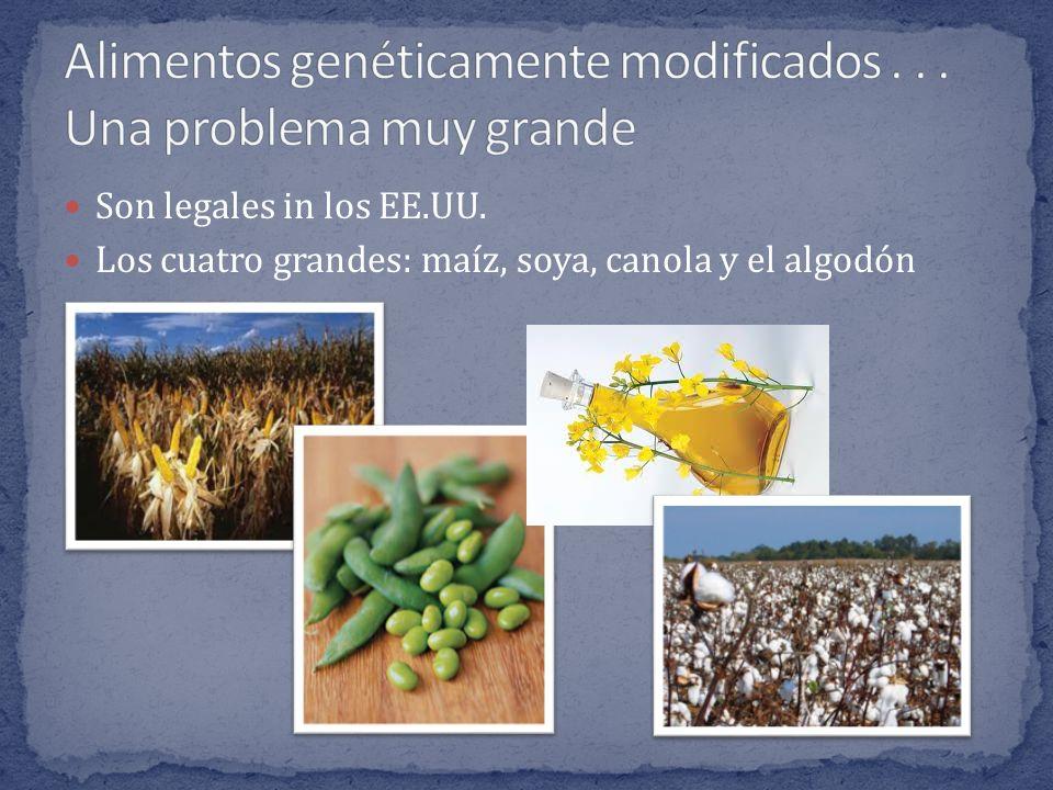 Son legales in los EE.UU. Los cuatro grandes: maíz, soya, canola y el algodón