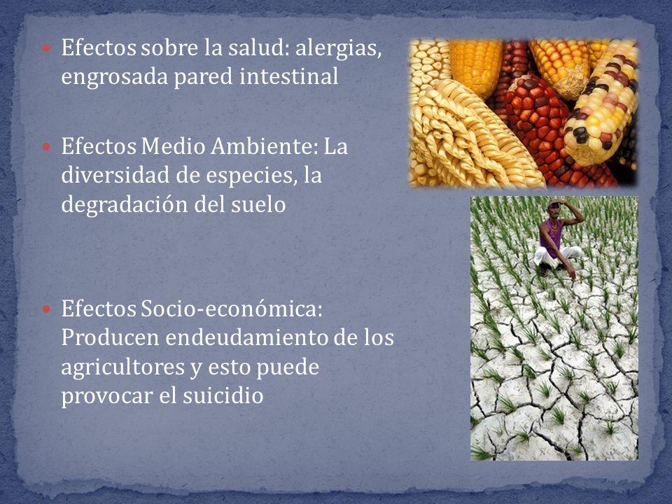 Efectos sobre la salud: alergias, engrosada pared intestinal Efectos Medio Ambiente: La diversidad de especies, la degradación del suelo Efectos Socio