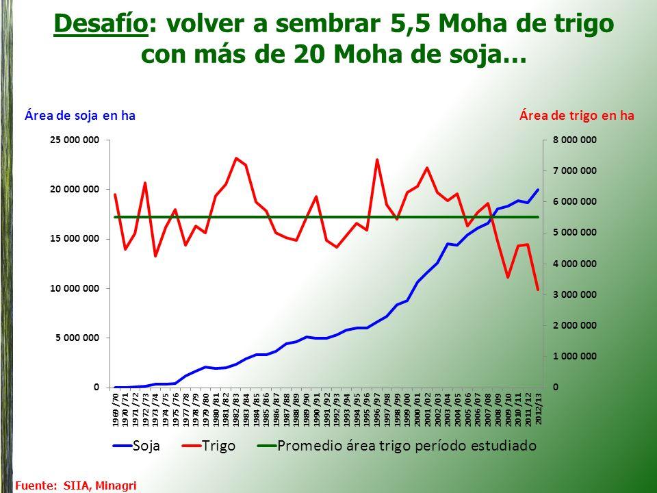 Hacia las 20 Mot de producción: ¿Cómo absorber 13 Mot de exports de trigo? (harina excluida)
