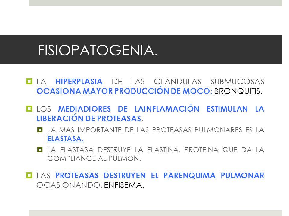 FISIOPATOGENIA. LA HIPERPLASIA DE LAS GLANDULAS SUBMUCOSAS OCASIONA MAYOR PRODUCCIÓN DE MOCO : BRONQUITIS. LOS MEDIADIORES DE LAINFLAMACIÓN ESTIMULAN