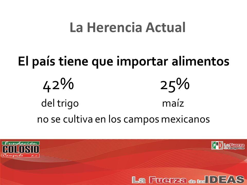 El país tiene que importar alimentos 42% 25% del trigo maíz no se cultiva en los campos mexicanos
