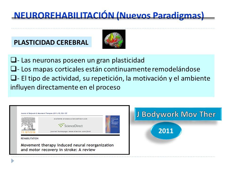 NEUROREHABILITACIÓN (Nuevos Paradigmas) - Las neuronas poseen un gran plasticidad - Los mapas corticales están continuamente remodelándose - El tipo d