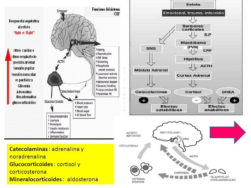 Catecolaminas : adrenalina y noradrenalina Glucocorticoides : cortisol y corticosterona Mineralocorticoides : aldosterona
