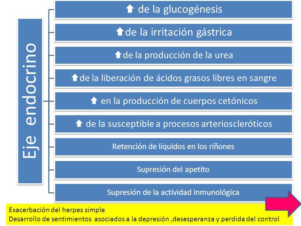 Eje endocrino de la glucogénesis de la irritación gástrica de la producción de la urea de la liberación de ácidos grasos libres en sangre en la produc