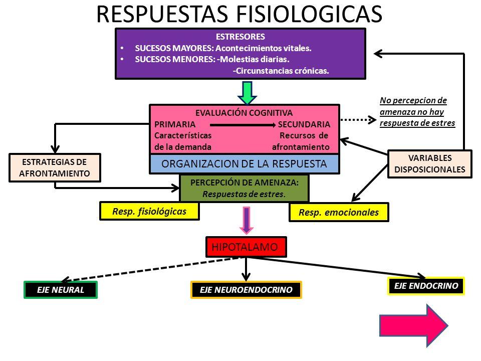 EJE NEURAL DILATACION PUPILAR SECRECION SALIVAR ESPESA SUDORACION COPIOSA DE LA TASA CARDIACA DE LA CONTRACTIBILIDAD DEL CORAZON DE LA RAPIDEZ DEL IMPULSO CARDIACO VASOCONSTRICCION DE LOS VASOS CEREBRALES Y DE LA PIEL VASODILATACION DE LOS VASOS DE LOS MUSCULOS DILATACION DE LOS BRONQUIOS GLUCOGENESIS DEL HIGADO CONTRACCION DEL BAZO INHIBICION DE LA VEJIGA URINARIA DEL PERISTALTISMO Y TONO GASTROINTESTINAL PILOERECCION DEL METABOLISMO