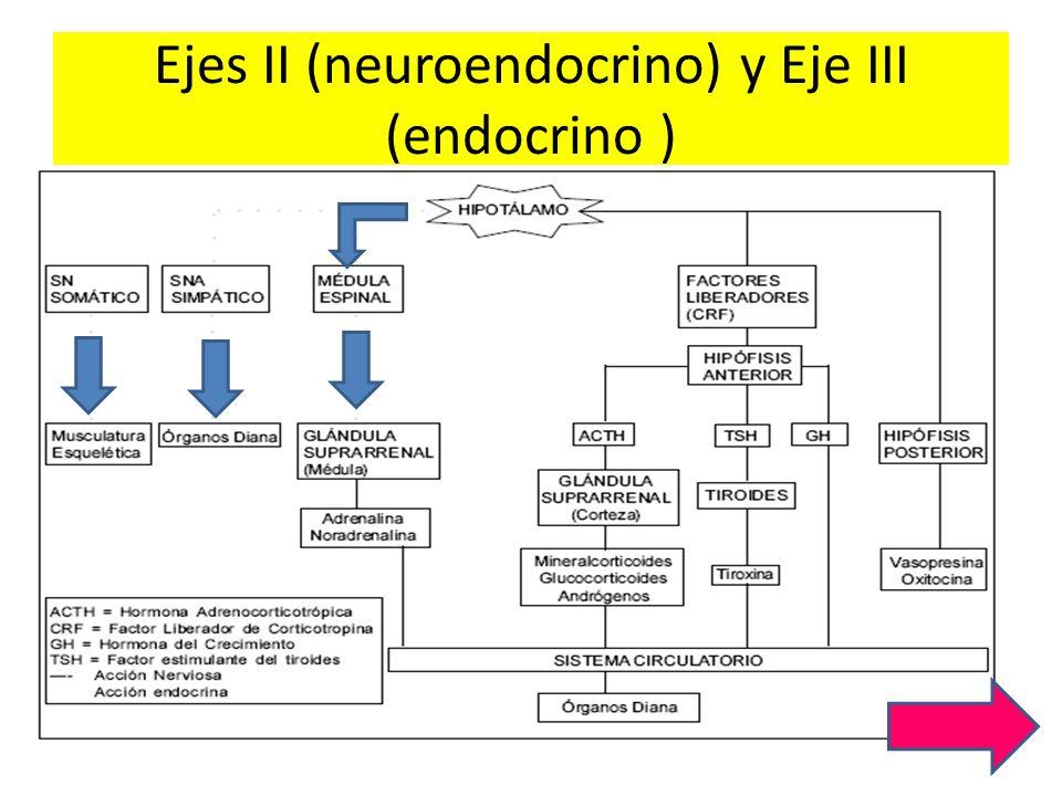 Ejes II (neuroendocrino) y Eje III (endocrino )