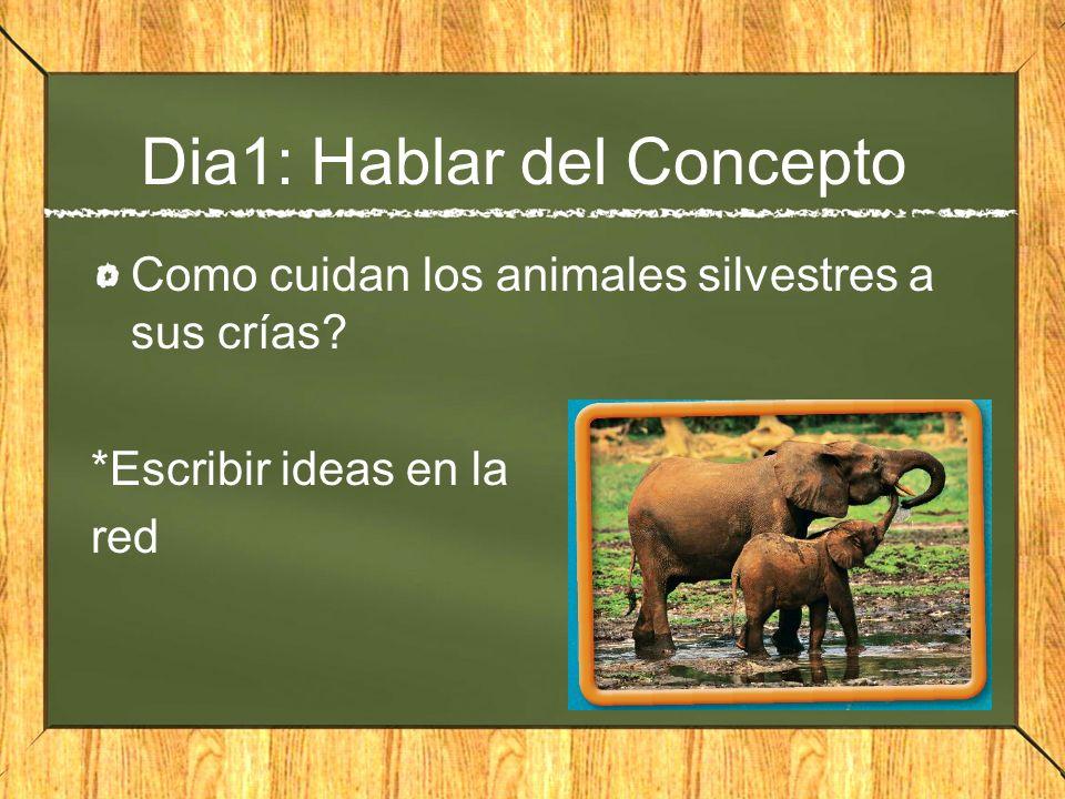 Dia1: Hablar del Concepto Como cuidan los animales silvestres a sus crías? *Escribir ideas en la red
