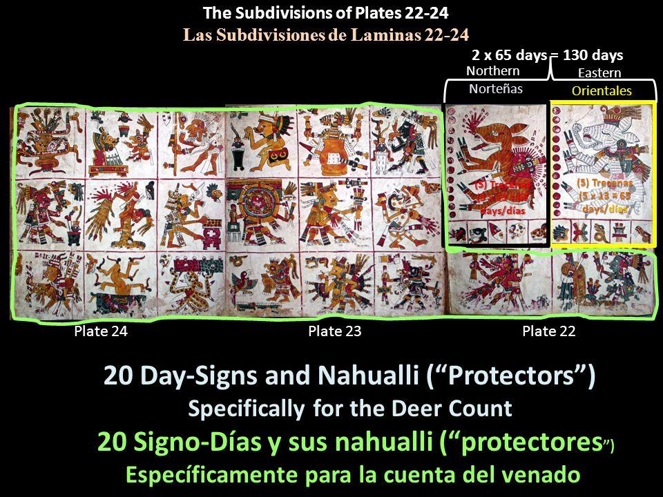 The Subdivisions of Plates 22-24 Las Subdivisiones de Laminas 22-24 Plate 22Plate 23Plate 24 2 x 65 days = 130 days (5) Trecenas (5 x 13 = 65 days/día