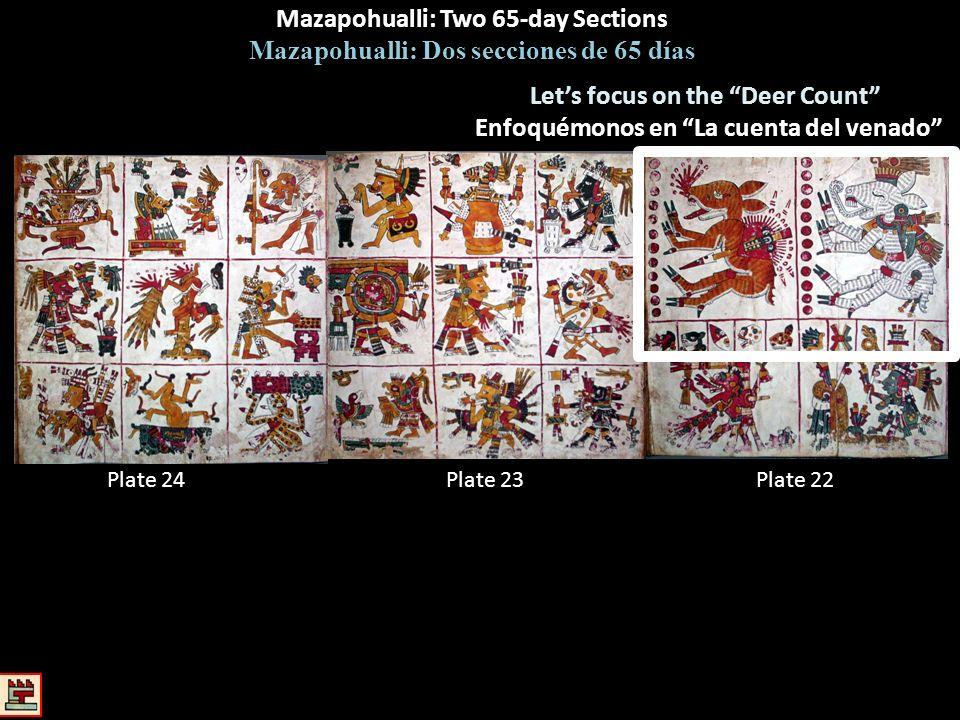 Mazapohualli: Two 65-day Sections Mazapohualli: Dos secciones de 65 días Plate 22Plate 23Plate 24 Lets focus on the Deer Count Enfoquémonos en La cuen