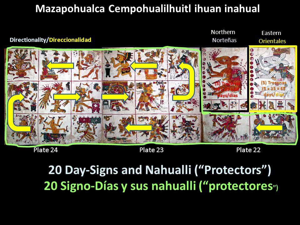 Mazapohualca Cempohualilhuitl ihuan inahual Plate 22Plate 23Plate 24 (5) Trecenas (5 x 13 = 65 days/días EasternOrientales NorthernNorteñas (5) Trecen