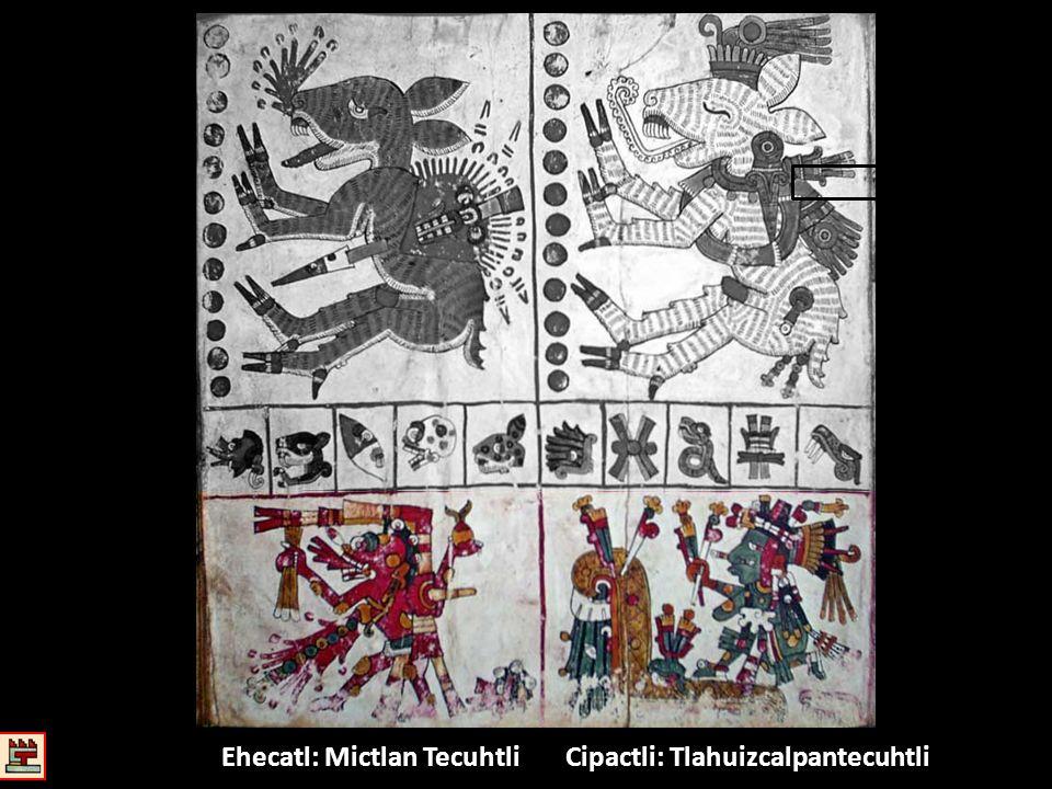 Cipactli: Tlahuizcalpantecuhtli Ehecatl: Mictlan Tecuhtli