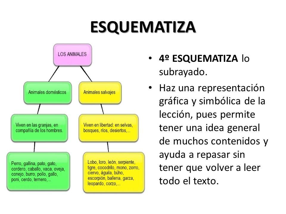 LEE 3º LEE cada apartado de forma más profunda y sistemática. Concéntrate en los puntos principales. Subraya lo más importante conforme lees y entiend