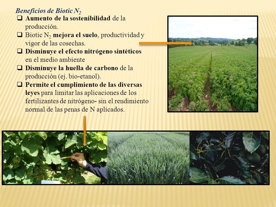 Aumento de la sostenibilidad de la producción. Biotic N 2 mejora el suelo, productividad y vigor de las cosechas. Disminuye el efecto nitrógeno sintét