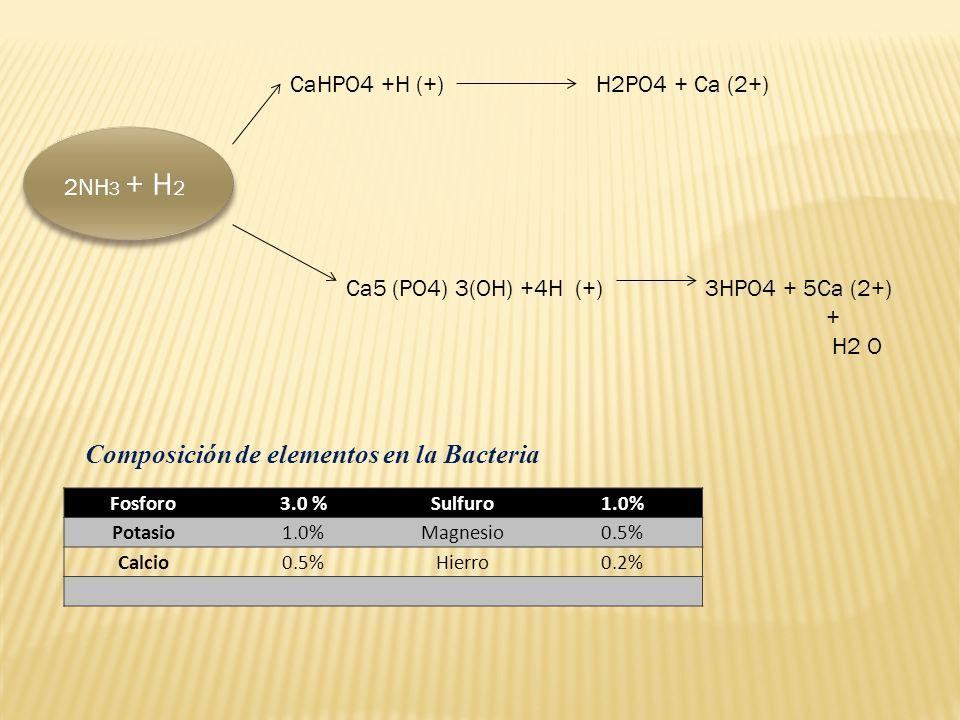 2NH 3 + H 2 CaHPO4 +H (+) H2PO4 + Ca (2+) Ca5 (PO4) 3(OH) +4H (+) 3HPO4 + 5Ca (2+) + H2 O Composición de elementos en la Bacteria Fosforo3.0 %Sulfuro1