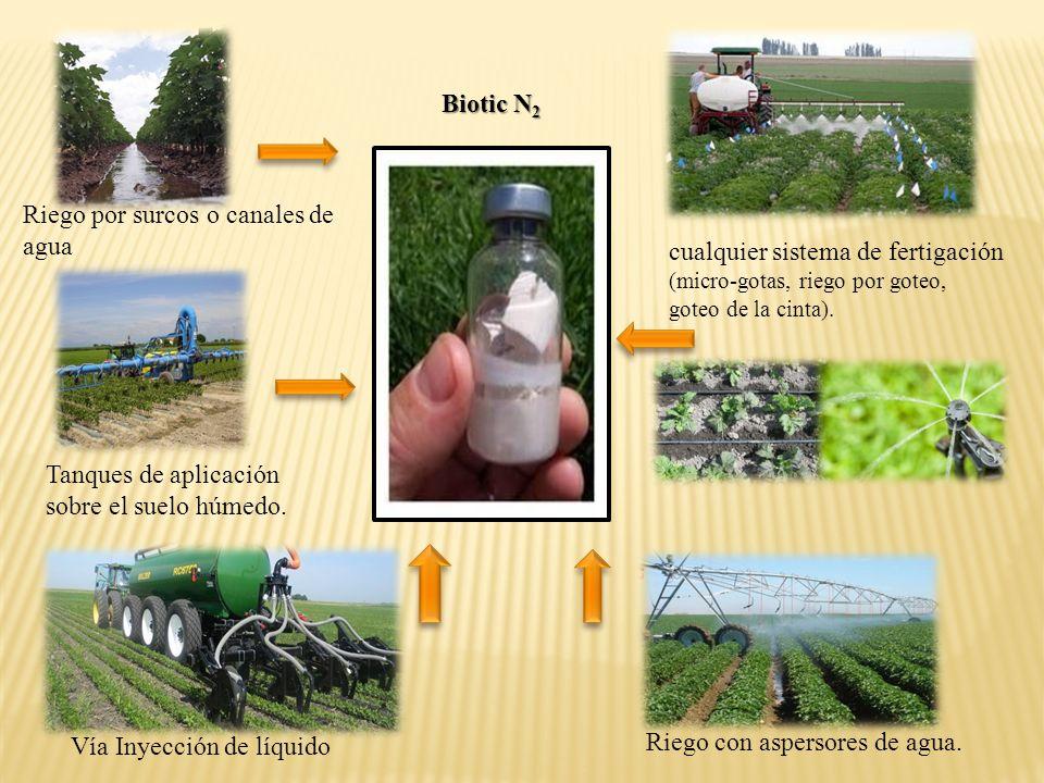 XYLEMXYLEM Hojas y ramas ENDOPHYTES Cuando Biotic N 2 se aplica en el suelo estos colonizan la rizósfera.