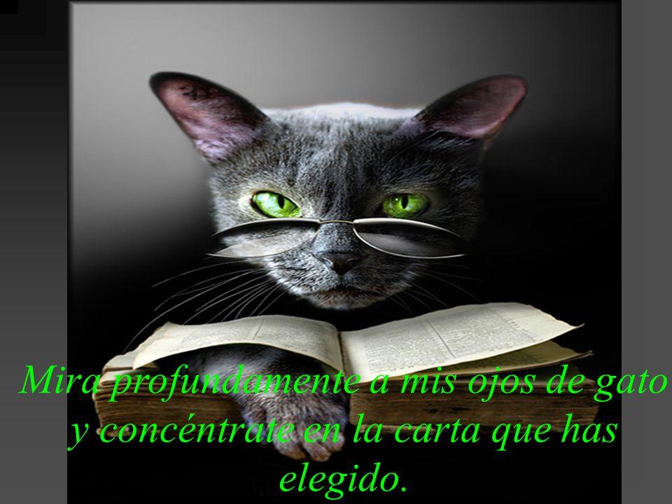 Mira profundamente a mis ojos de gato y concéntrate en la carta que has elegido.