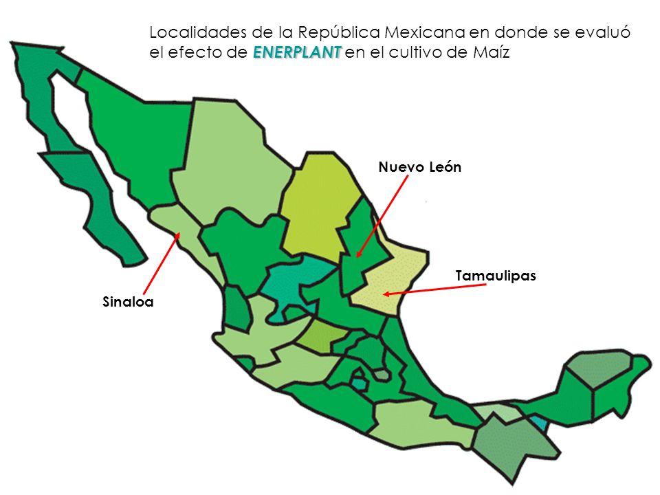 Nuevo León Tamaulipas Sinaloa Localidades de la República Mexicana en donde se evaluó ENERPLANT el efecto de ENERPLANT en el cultivo de Maíz