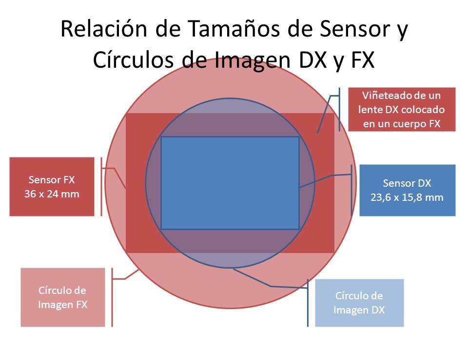 Relación de Tamaños de Sensor y Círculos de Imagen DX y FX Círculo de Imagen DX Círculo de Imagen FX Sensor FX 36 x 24 mm Sensor DX 23,6 x 15,8 mm Viñeteado de un lente DX colocado en un cuerpo FX
