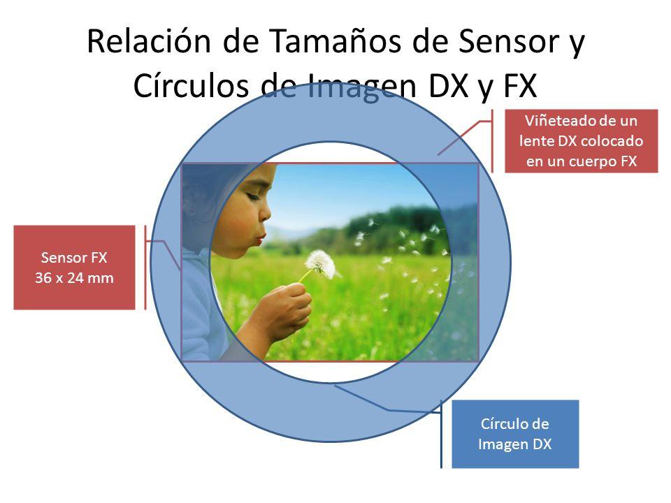 Relación de Tamaños de Sensor y Círculos de Imagen DX y FX Sensor FX 36 x 24 mm Círculo de Imagen DX Viñeteado de un lente DX colocado en un cuerpo FX