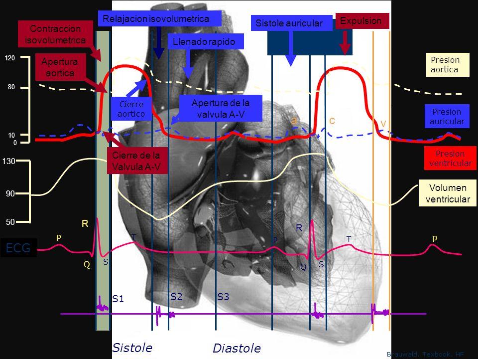 Adaptaciones Locales A Precarga Distensión de fibras miocárdicas Volumen latido Ehhhhh???