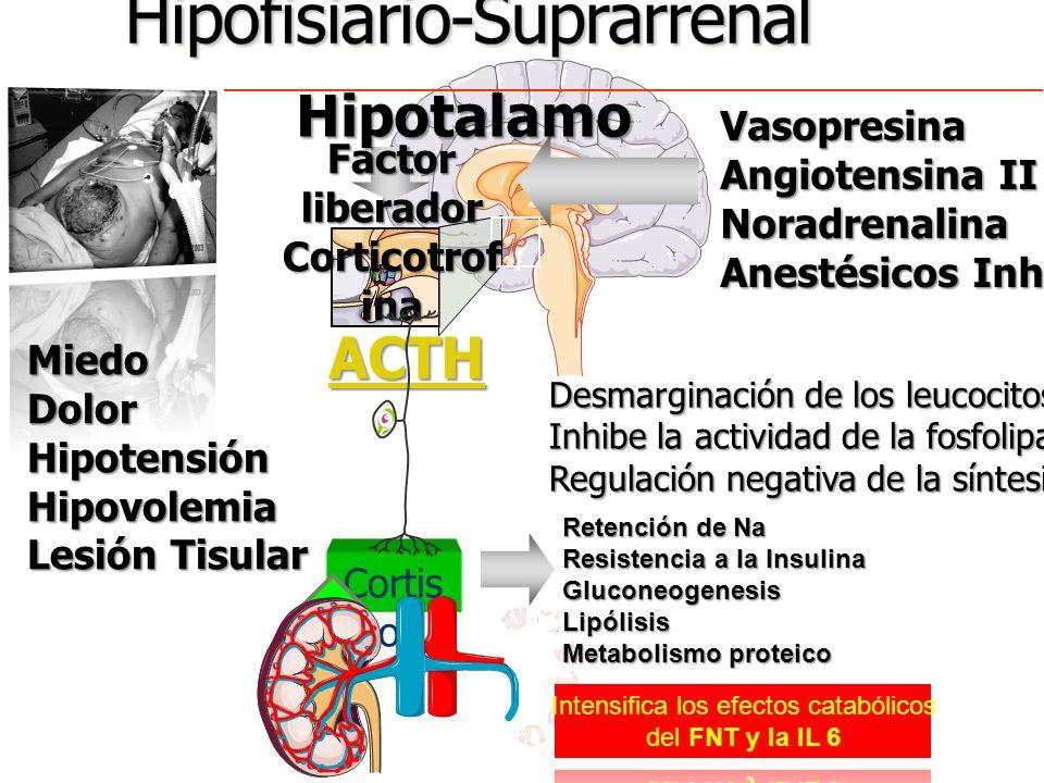 VAP Peptido natriuretico auricular Barorreceptores Perdida de volemia Hipotalamo Vasoconstrictor Reabsorción de agua Volumen Presión