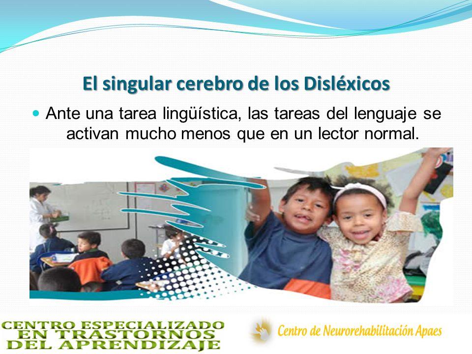 El singular cerebro de los Disléxicos Ante una tarea lingüística, las tareas del lenguaje se activan mucho menos que en un lector normal.