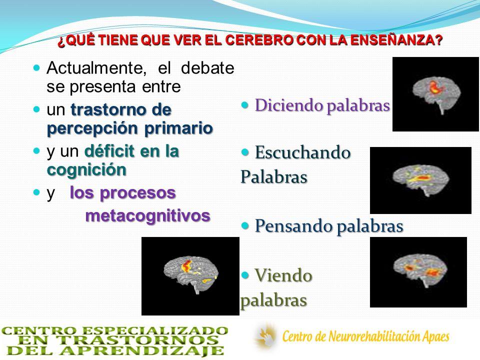 ¿QUÉ TIENE QUE VER EL CEREBRO CON LA ENSEÑANZA? Actualmente, el debate se presenta entre trastorno de percepción primario un trastorno de percepción p
