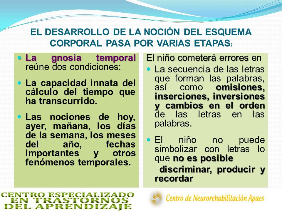 EL DESARROLLO DE LA NOCIÓN DEL ESQUEMA CORPORAL PASA POR VARIAS ETAPAS : La gnosia temporal La gnosia temporal reúne dos condiciones: La capacidad inn