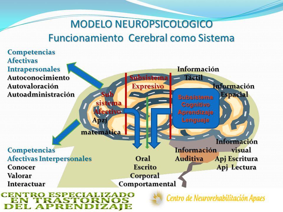 MODELO NEUROPSICOLOGICO Funcionamiento Cerebral como Sistema CompetenciasAfectivas Intrapersonales Información Autoconocimiento Subsistema Táctil Auto