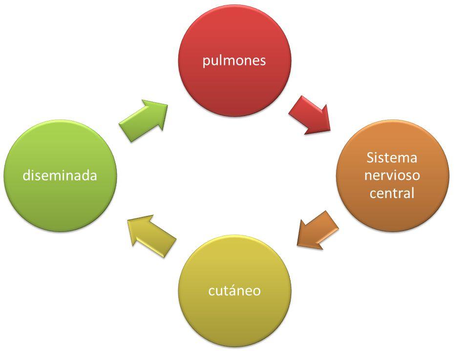 pulmones Sistema nervioso central cutáneodiseminada