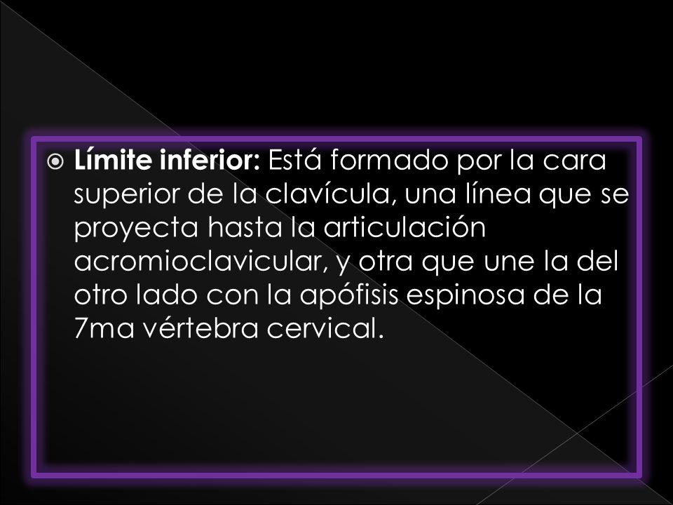 Límite inferior: Está formado por la cara superior de la clavícula, una línea que se proyecta hasta la articulación acromioclavicular, y otra que une