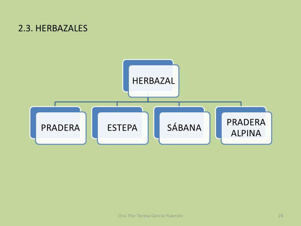 2.3. HERBAZALES HERBAZALPRADERAESTEPASÁBANA PRADERA ALPINA Dra. Flor Teresa García Huamán28