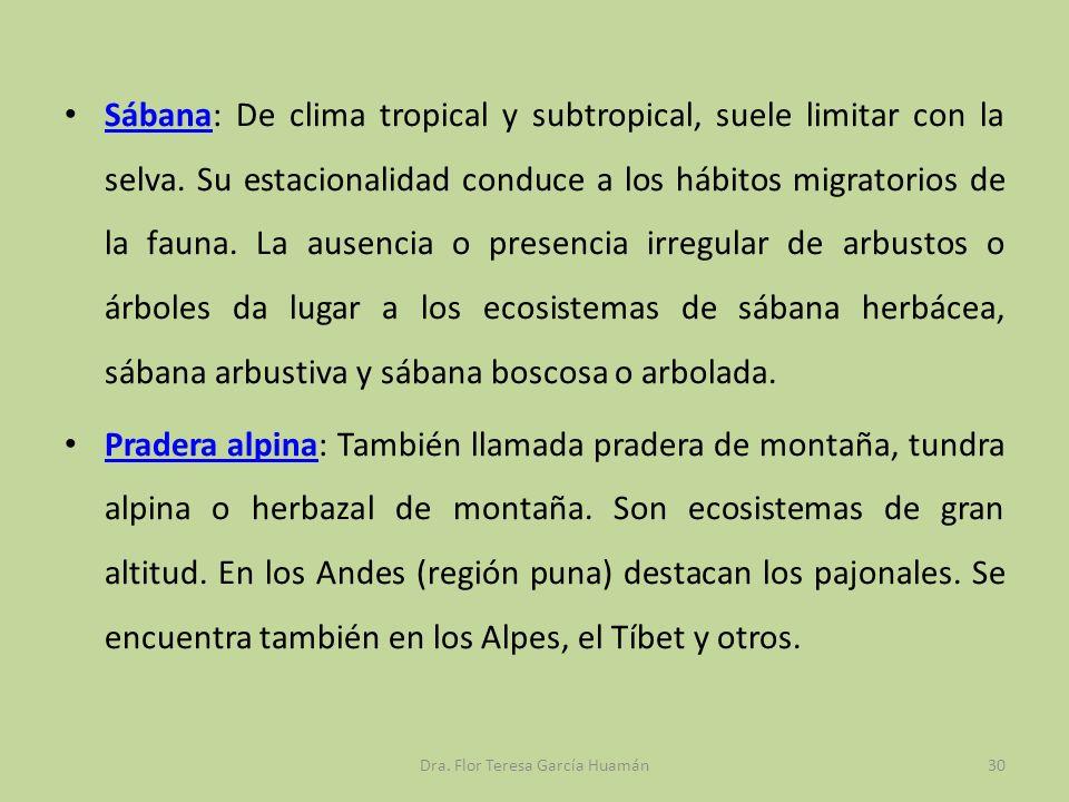 Sábana: De clima tropical y subtropical, suele limitar con la selva. Su estacionalidad conduce a los hábitos migratorios de la fauna. La ausencia o pr