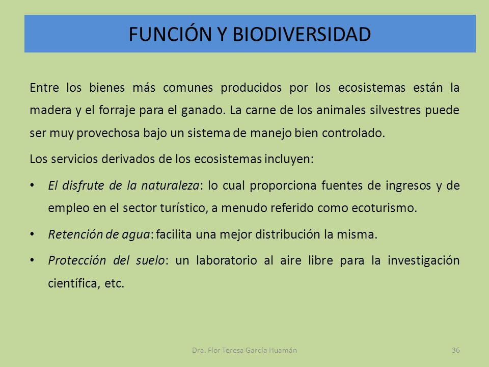 FUNCIÓN Y BIODIVERSIDAD Entre los bienes más comunes producidos por los ecosistemas están la madera y el forraje para el ganado. La carne de los anima