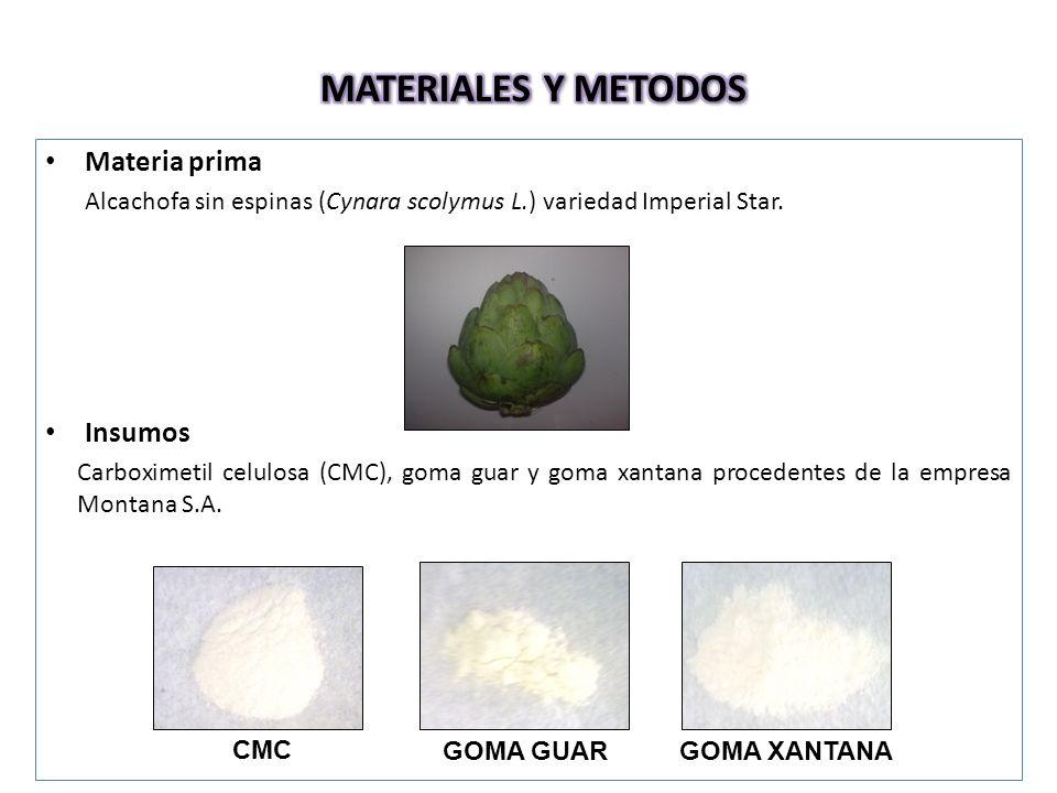 Materia prima Alcachofa sin espinas (Cynara scolymus L.) variedad Imperial Star.