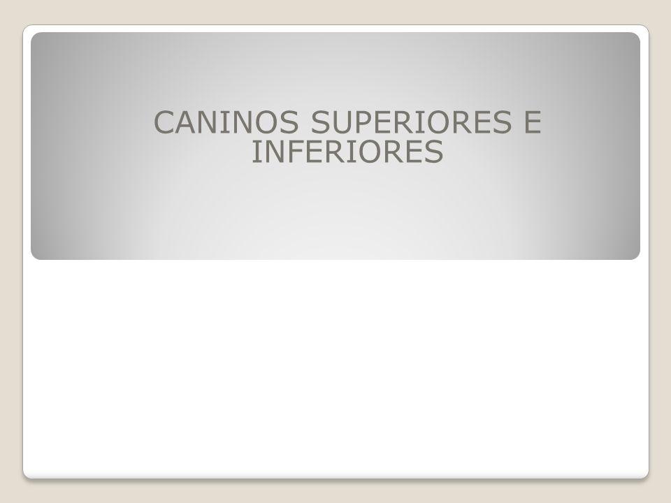 CARACTERISTICAS DE LOS CANINOS Los caninos superiores e inferiores son similares entre si.
