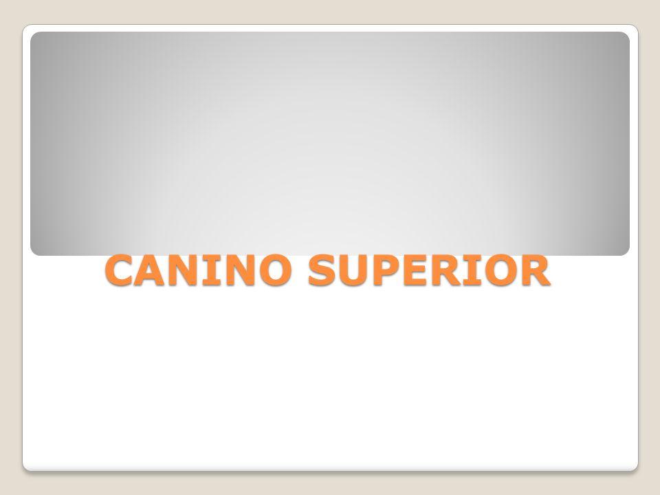 CANINO INFERIOR